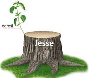 Pęd z martwego pnia Jessego
